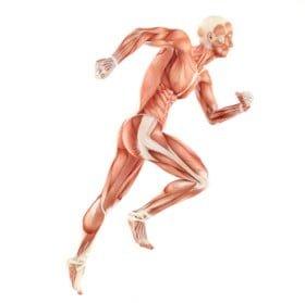 Muskelaufbau mit L-Glutamin